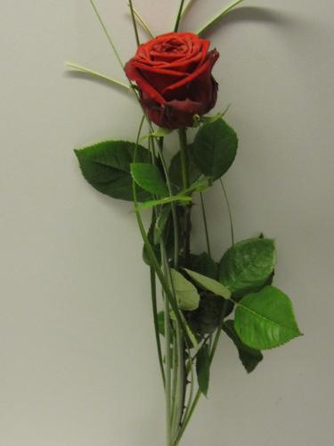 Blumenstrauss Eine Rote Rosen Red Naomi Extra Grossblumig Mit