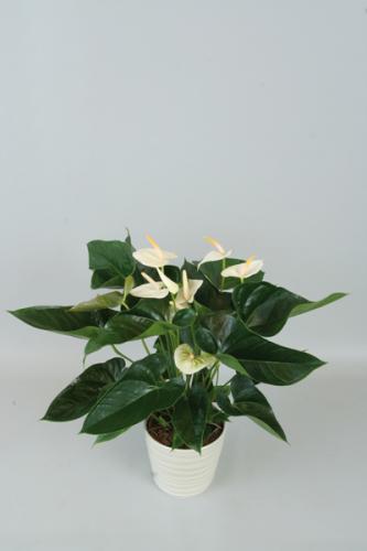 blumenstrauss zum jubil um blumen pflanzen floristik dekoration vollsortiment. Black Bedroom Furniture Sets. Home Design Ideas