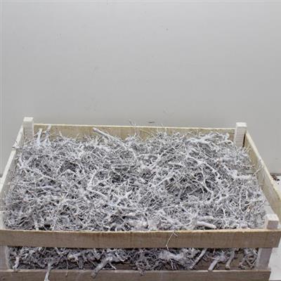 Bonsai holz weiss getrocknet 100 gr versand f r blumen for Bonsai versand