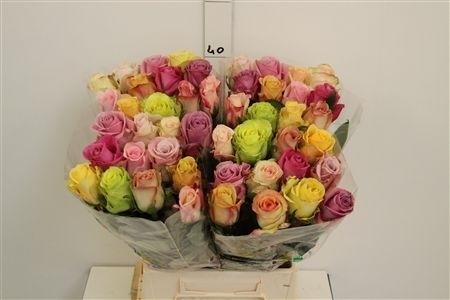 versand für rosen