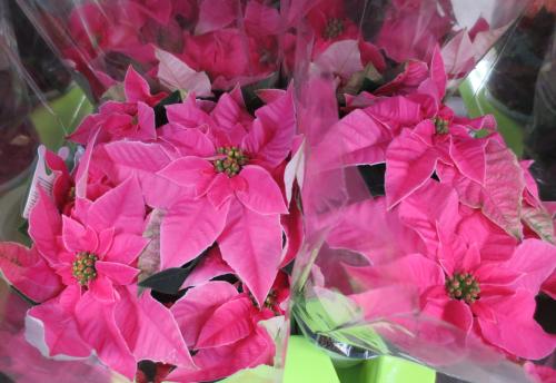 herbst blumen pflanzen deko artikel bl mchen floristik versand. Black Bedroom Furniture Sets. Home Design Ideas