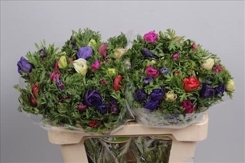 Anemonen bunt gemischt 10 st ck bl mchen floristik versand for Floristik versand